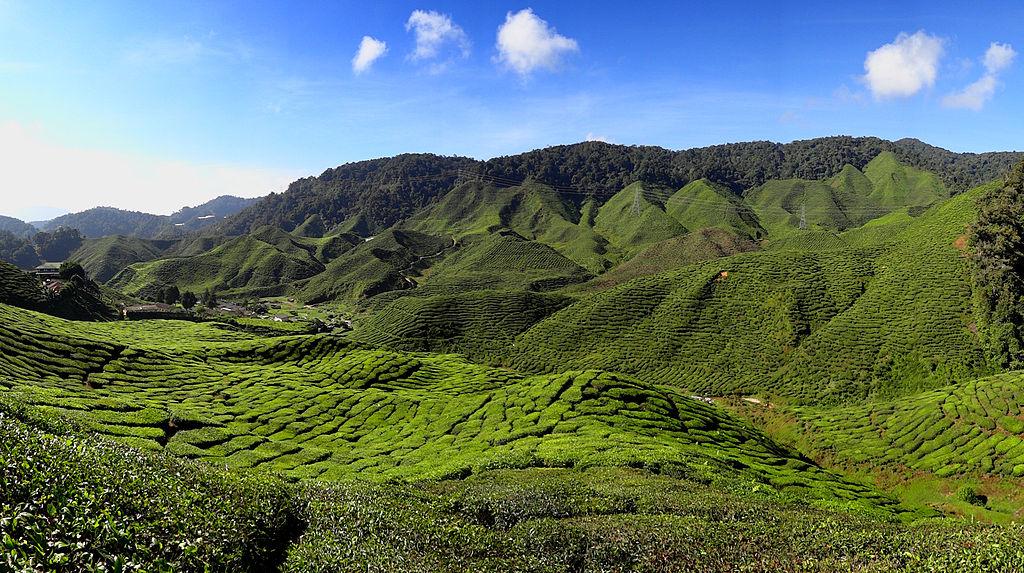 infovelo-com-malaisie-cameron-highlands
