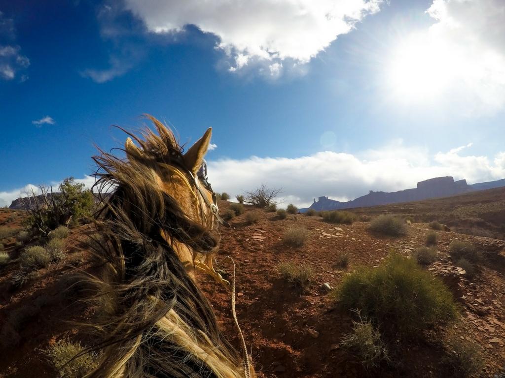 Infovelo.com---moab-vélo-de-montagne-horseride2